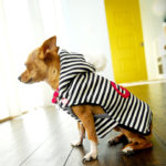 dogsweater2